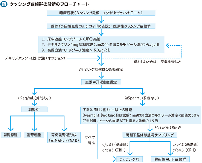 Images of クッシング症候群 - JapaneseClass.jp