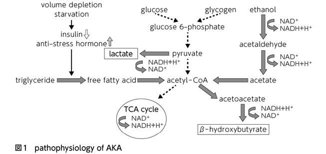 性 アシドーシス 原因 代謝