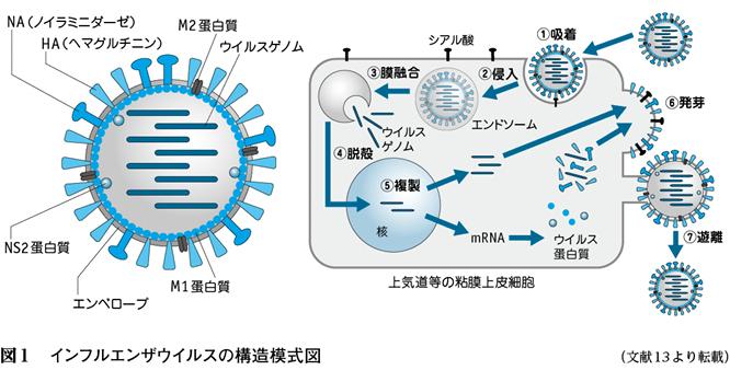 インフル ワクチン 効果
